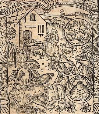 """Reproduction d'une gravure représentant la tonte des moutons extraite du """"Grant Kalendrier des bergers""""."""